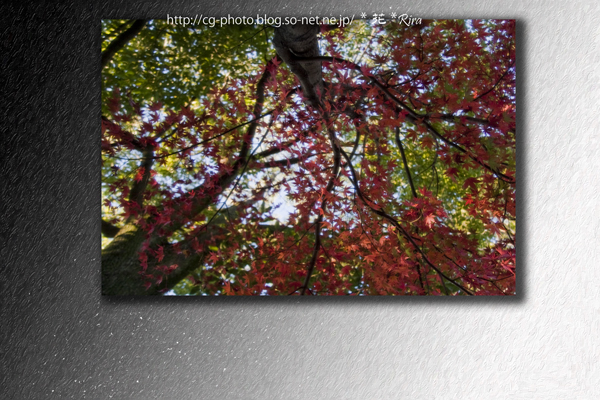 2009-11-18_紅葉_0181