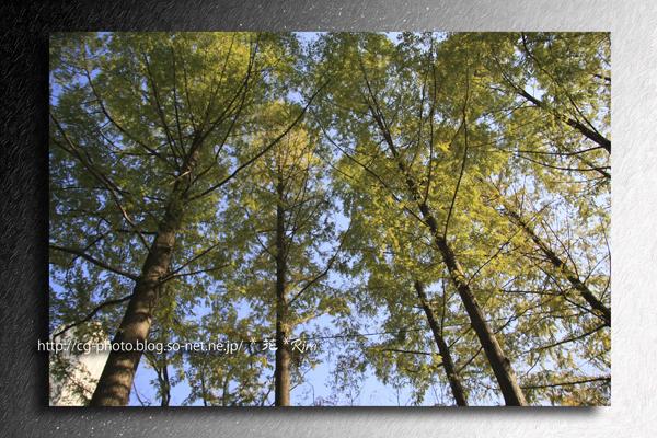 2009-11-06_紅葉_0045