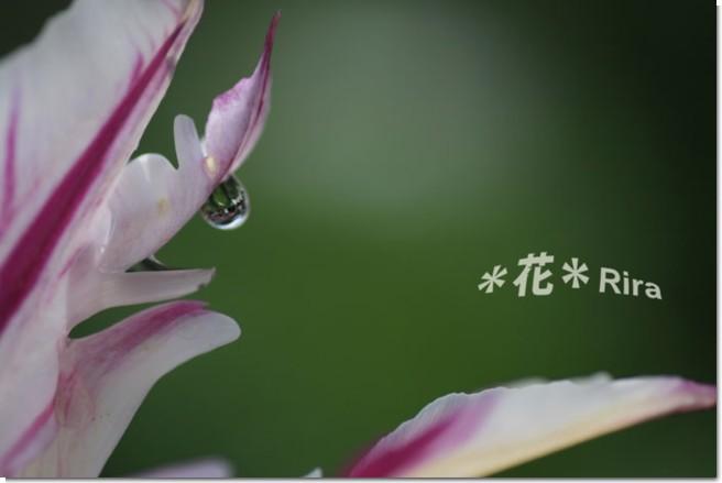 IMG_0582.jpg
